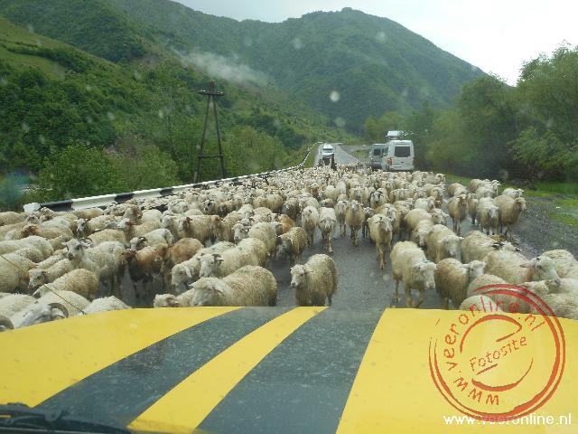 Schapen op de Georgian Military Highway