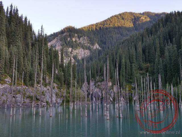 Boomstammen staan fier overeind in het Kaindy meer