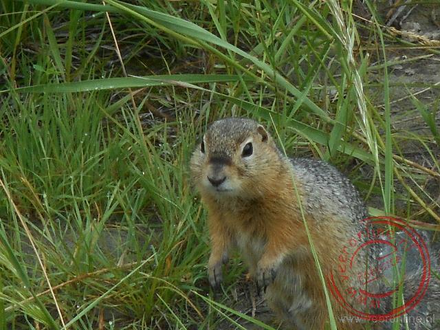 Een eenhoorntje kijkt nieuwsgierig rond