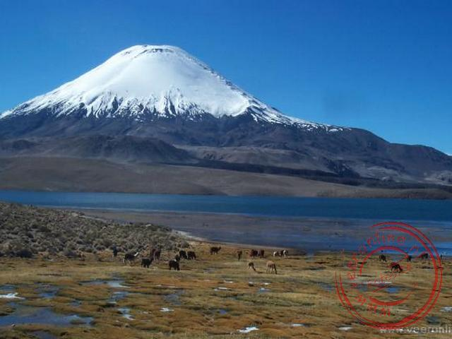 Het hoogste meer ter wereld op 4.650 meter het Lago Chungara met de Parinacota vulkaan (6.310 m.) op de achtergrond