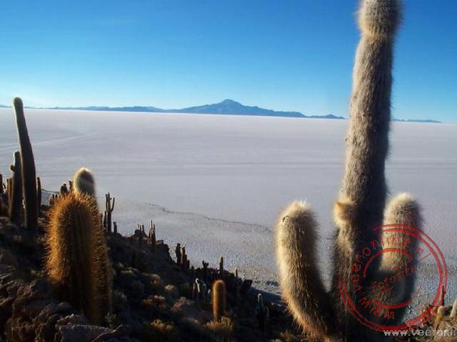 Het zoutmeer vanuit het Cactuseiland