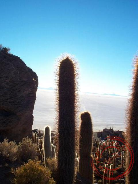 Het cactuseiland