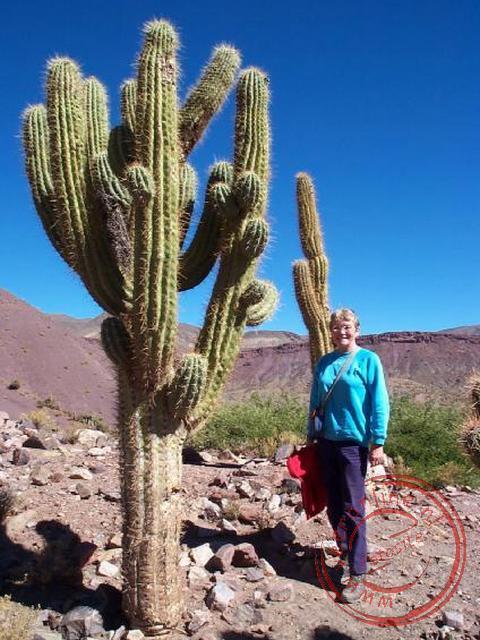 Bijna niet voor te stellen dat cactussen 1 tot 3 centimeter per jaar groeien.