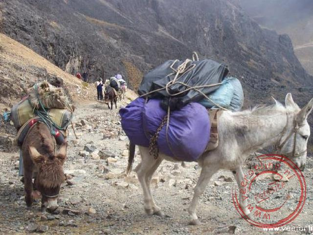 Geklopt door de ezels ... op weg naar de top. Zij hebben duidelijk minder last van de ijle lucht