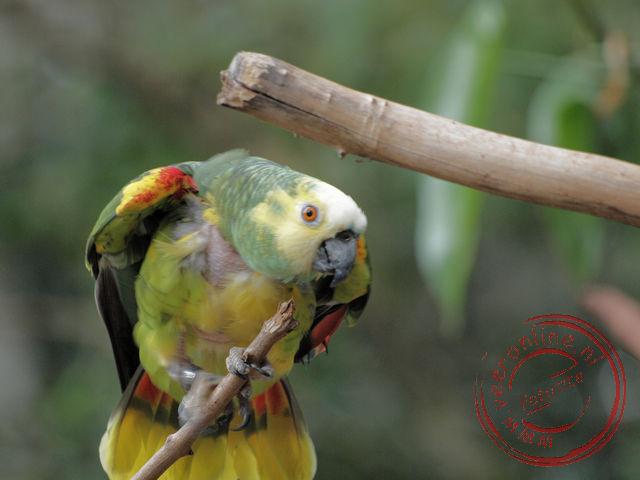 Kleurrijke papagaai