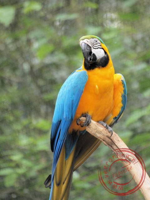 De kleurrijke papegaai in het Parque des Aves