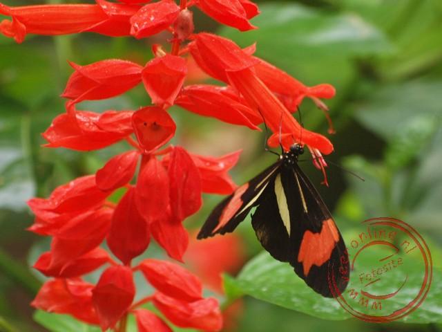 De geelband passiebloemvlinder in de vlindertuin van Parque des Aves