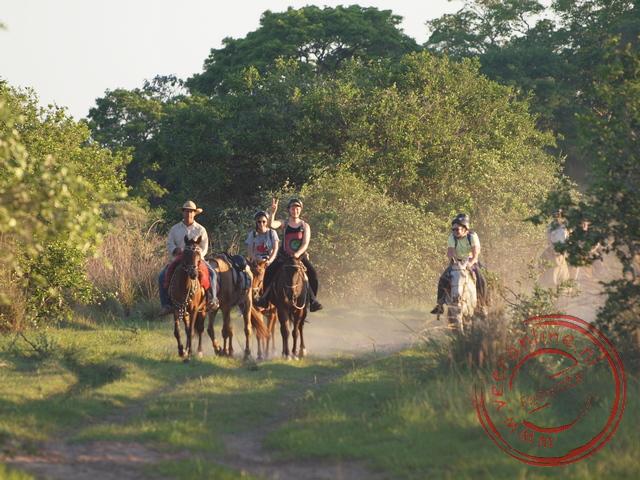 Op een paard op zoek naar dieren