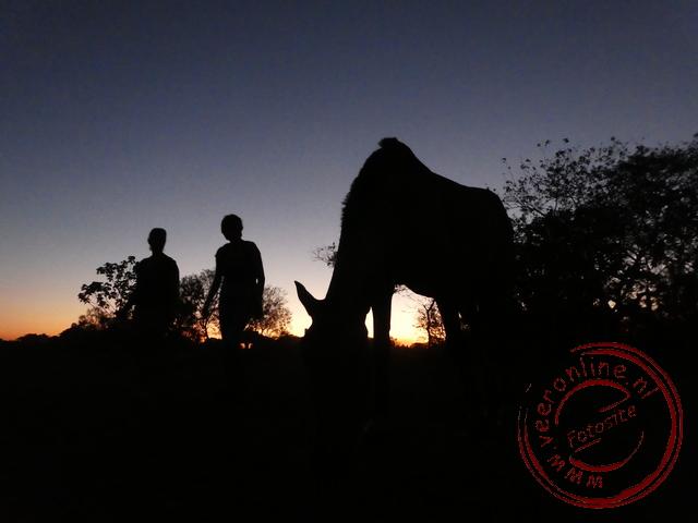 De wandeling in de Pantanal eindigt bij schermer