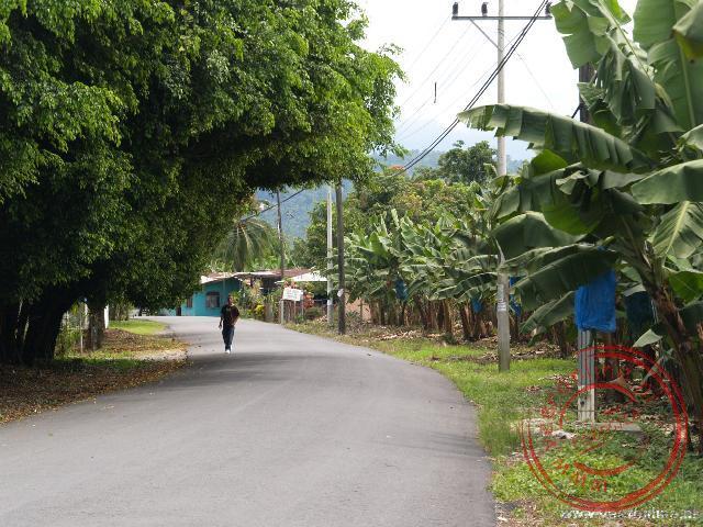 De bananenplantage