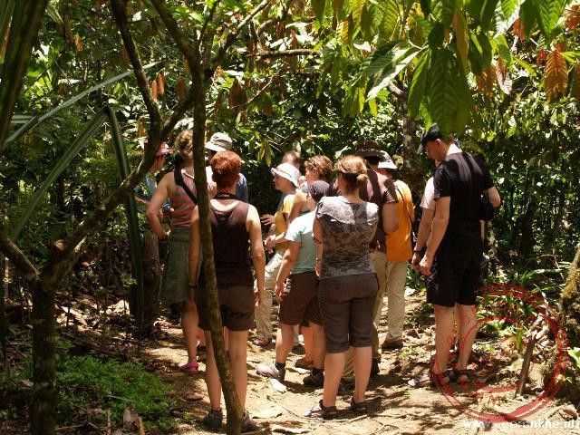 Een rondleiding in het Bribri reservaat. De medicijnman laat zien wat je met vruchten en planten kunt doen
