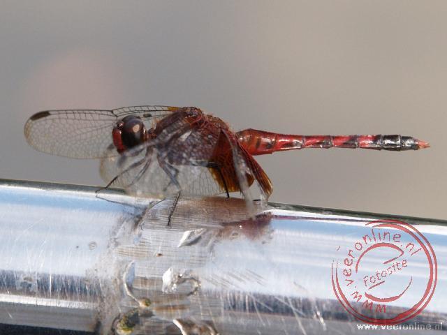 Een libelle of waterjuffer op de rand van de boot