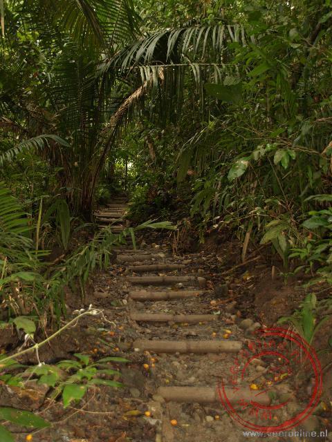 Het wandelpad Cathedral in natuurgebied Manuel Antonio