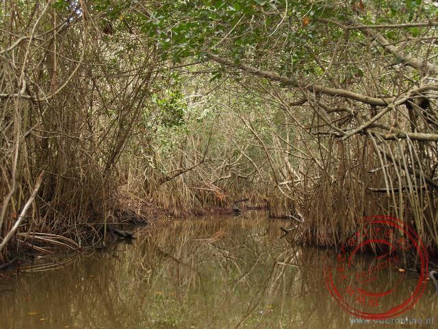 Varen door de mangrovebossen nabij Cayo Coco