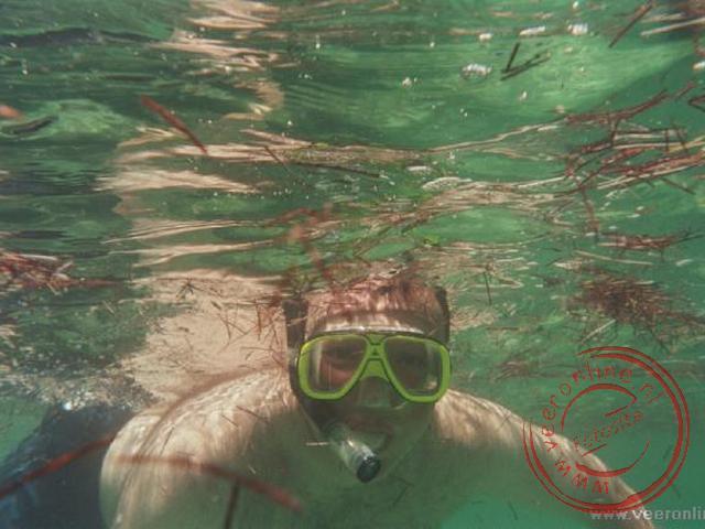 Snorkelen tussen het zeewier
