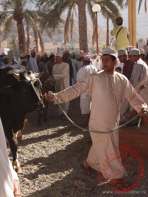Dieren worden rondgeleid op de veemarkt van Nizwa