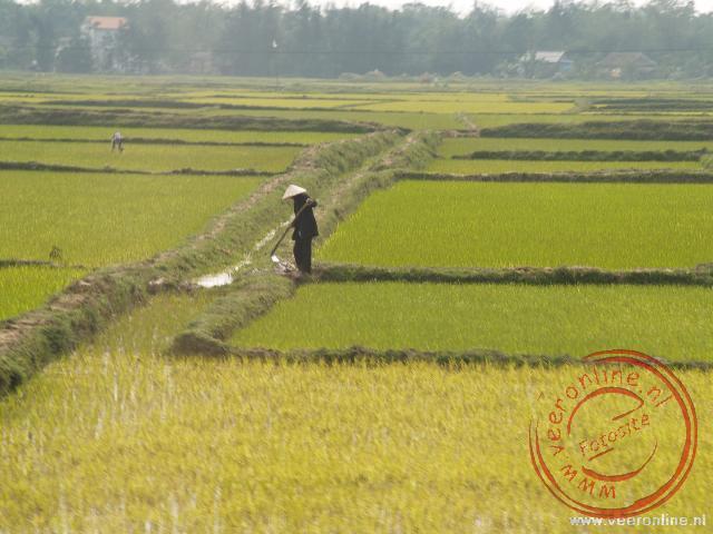 Zo ver je kunt kijken: rijstvelden