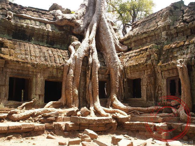 De boomwortels hebben greep op de Ta Phrom tempel