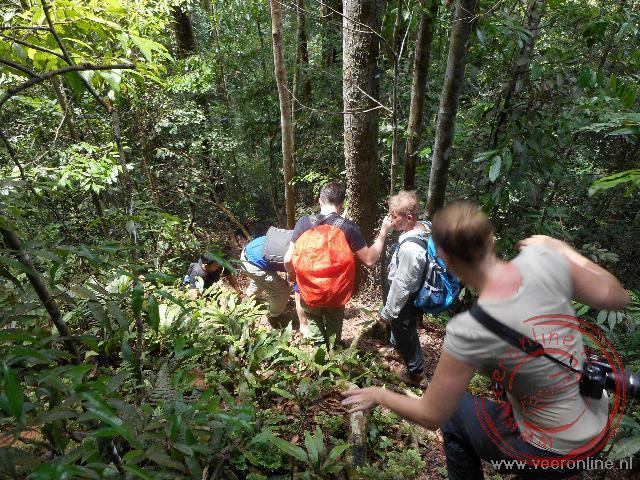 Klauteren door het bos op zoek naar Oerang Oetans