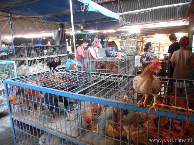 De kippen worden verhandeld op de markt van Balige