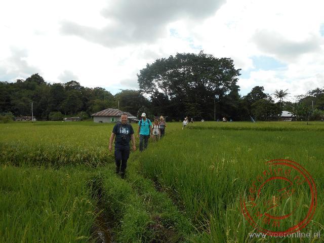 Wandelen over de smalle paadjes tussen de rijstvelden door