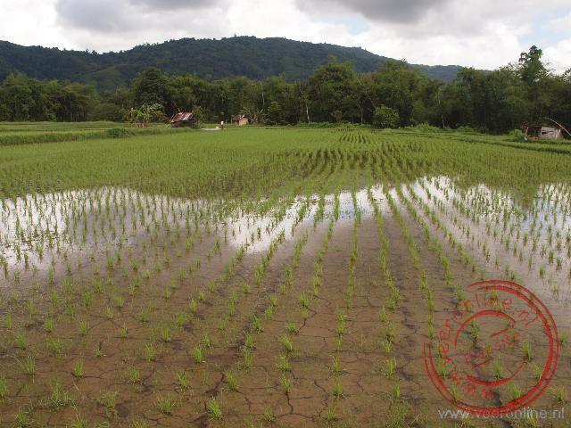 Dreigende wolken hangen boven de rijstvelden
