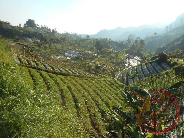 De rijstvelden liggen in terrassen tegen de berghelling