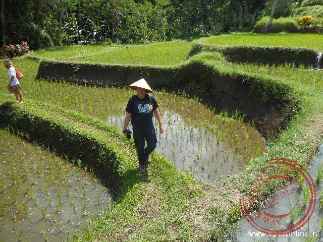 Wandelen tussen de rijstvelden plateaus