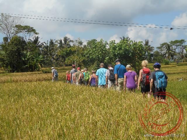 Wandelen tussen de rijstvelden door