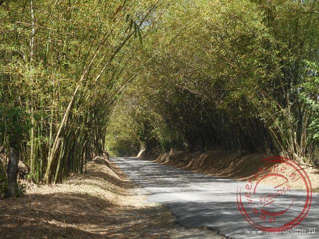 Over vierenhalve kilometer aan weerszijde bamboe struiken