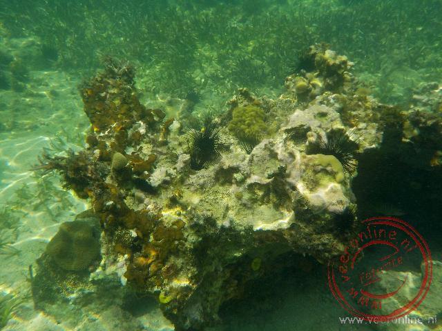 De mooie onderwaterwereld