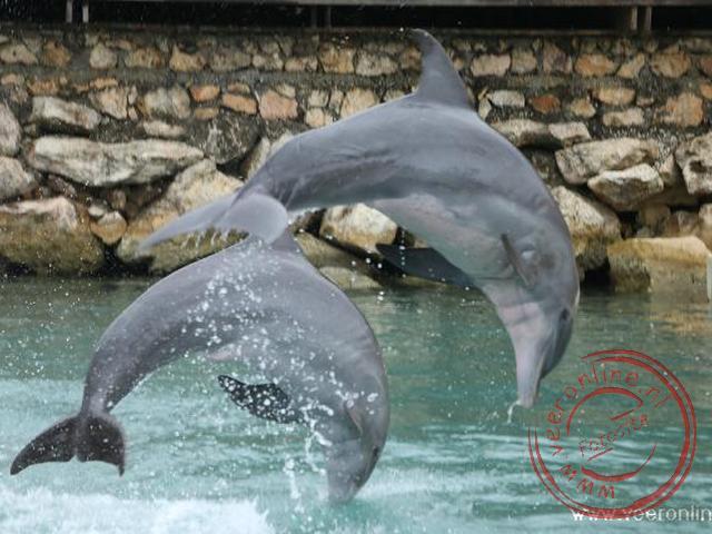 Zwemmen met dolfijnen bij Lucea