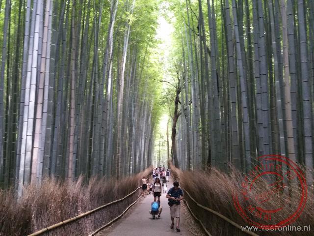 Wandelen in de schaduw door het bamboebos