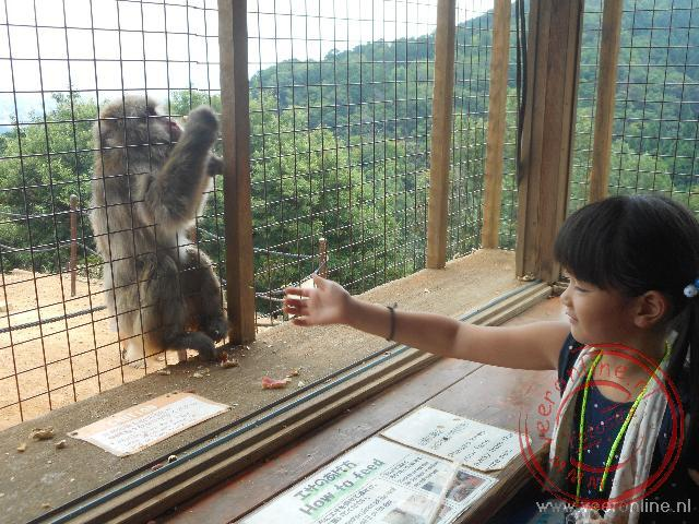 Van binnen uit mogen de apen gevoerd worden