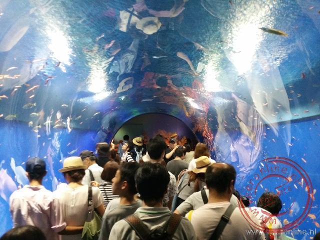 Een tunnel onder het aquarium door