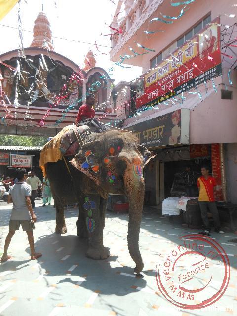 Een versierde olifant komt bij de Mata tempel ter ere van de geboortedag van Lord Krishna