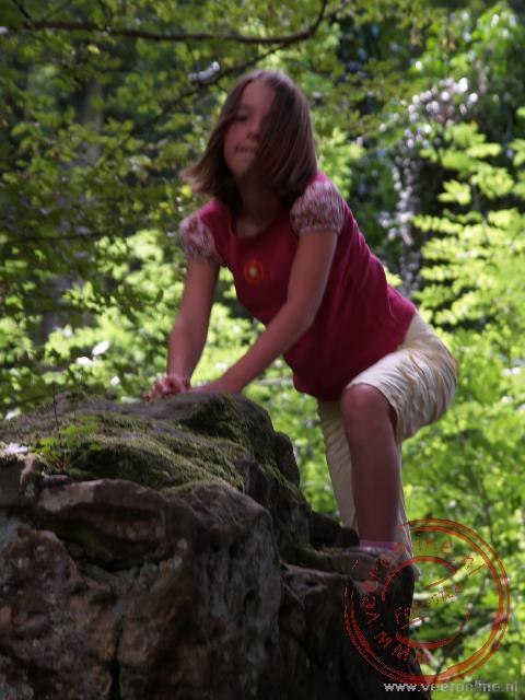 Carline op de rots