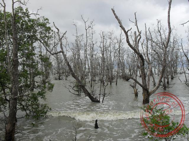 De Mangrovebossen bij Bako worden bij vloed overspoeld met zout water