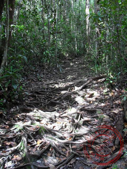 De trial loopt over vele boomstronken die soms behoorlijk glad zijn