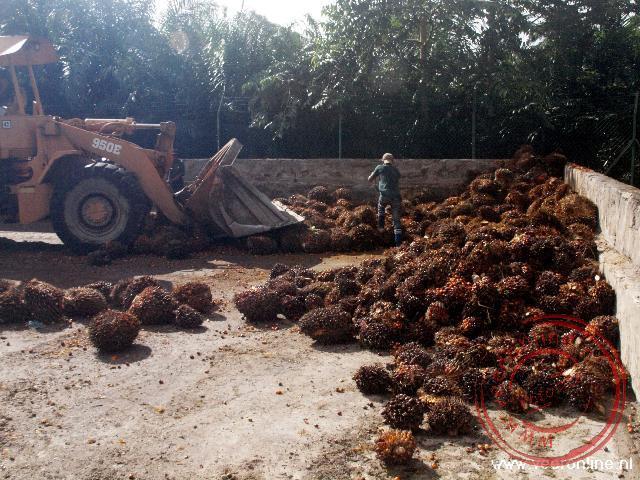 De verwerking van de palmolie op Borneo
