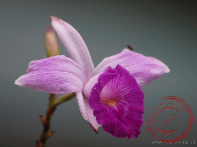Een kleurrijke orchidee