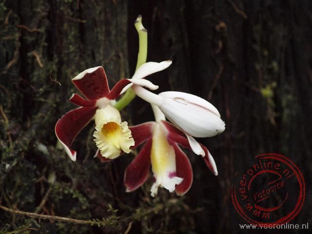 Een mooie orchidee in het bos
