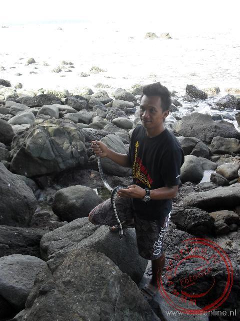 De bootsman pakt de zeeslang tussen de rotsen vandaan om aan ons te tonen