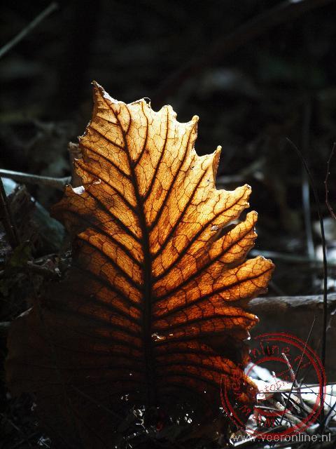 Het zonlicht valt prachtig op het grote blad