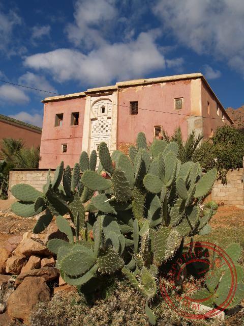 De cactussen in de Ammeln vallei