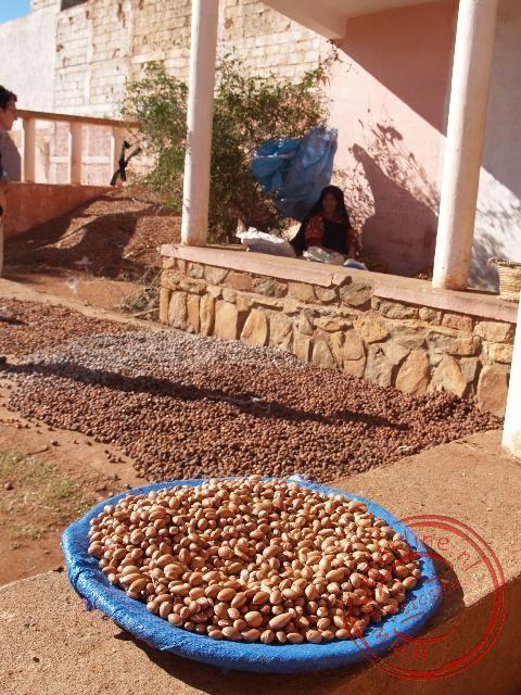 De noten liggen te drogen