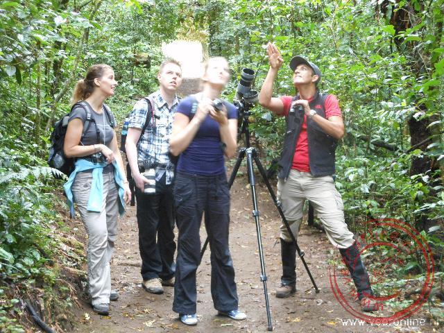 Vogels spotten in de bomen in Monteverde