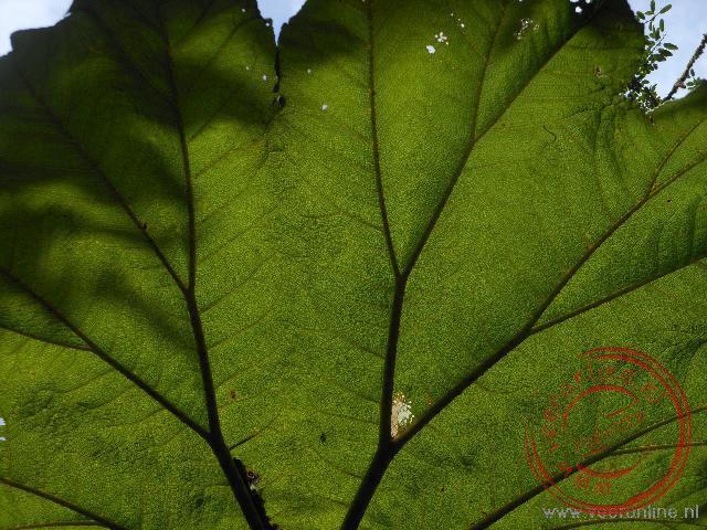 De zon schijnt op het grote blad in het nevelwoud