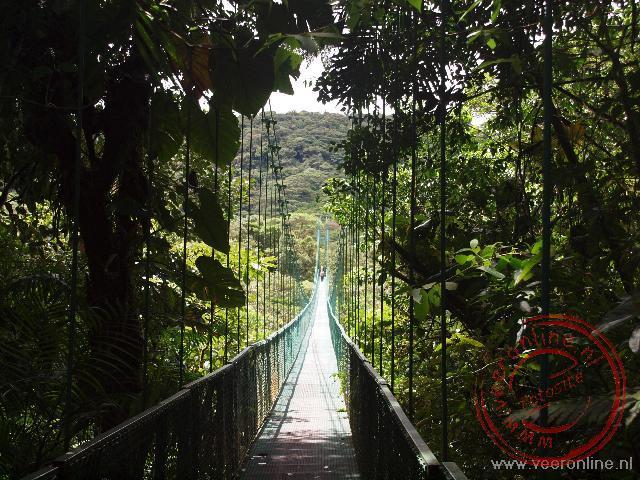Vanaf de hangbruggen in Monteverde is het oerwoud ook van boven te bekijken