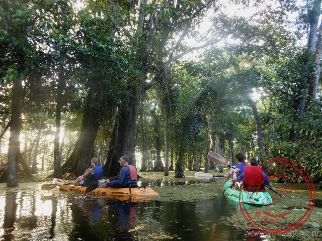Kajakken in de mangrovebossen op zoek naar brulapen